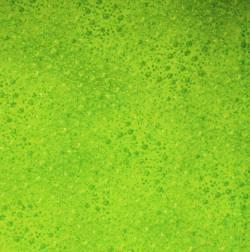 Robert Kaufman Fusions -light green-